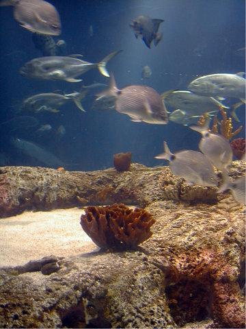 在米德尔顿广场酒店 - South Carolina Aquarium