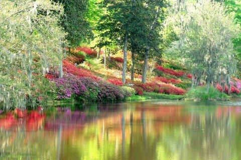 在米德尔顿广场酒店 - Flowered Landscaping