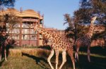 Disney&#39;s Animal Kingdom Lodge Resort