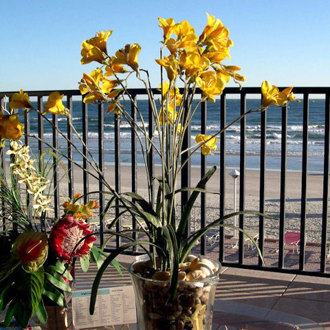 Daytona Inn Beach Resort - Ocean View