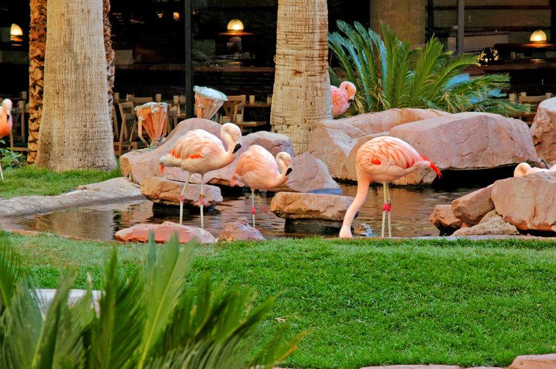 Las Vegas Hertz-Flamingo Hotel - Las Vegas, NV