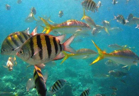 Curacao Marriott Beach Resort & Emerald Casino - Curacao Reef