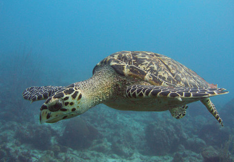 Curacao Marriott Beach Resort & Emerald Casino - Caribbean Reef Creatures
