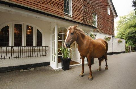 Moorhill House - Horse