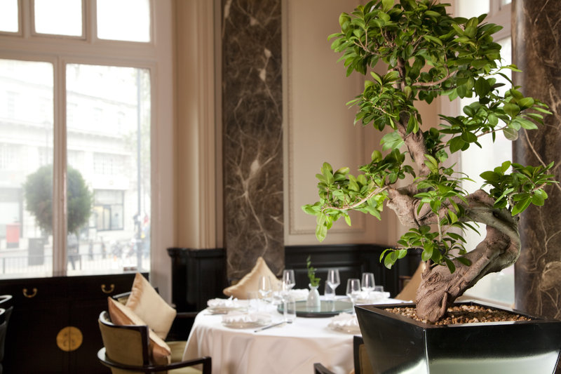 The Grosvenor Thistle Victoria レストラン