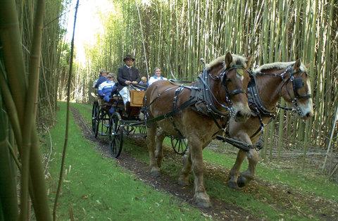 在米德尔顿广场酒店 - Carriage Ride