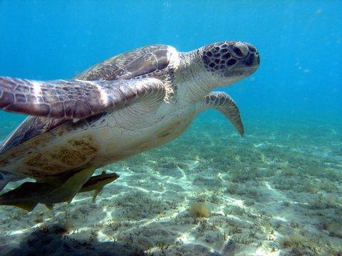 Hurghada Marriott Beach Resort - Red Sea Diving