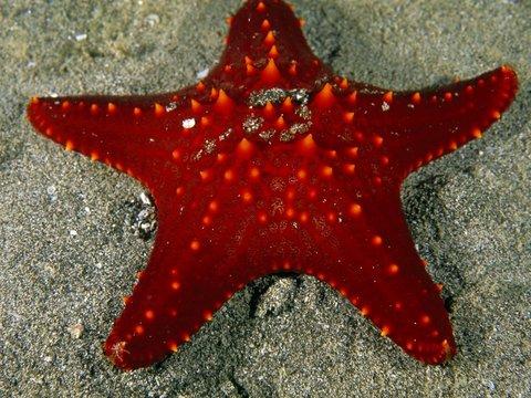 Hurghada Marriott Beach Resort - Red Sea Star Doubilet