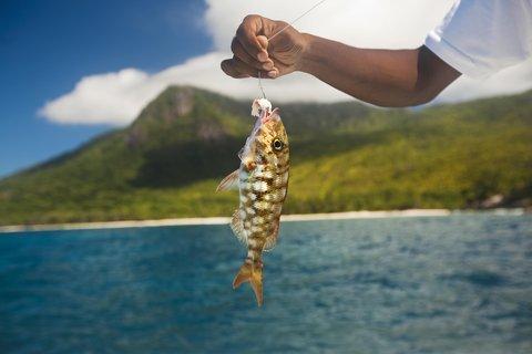 Hilton Seychelles Labriz Resort And Spa - Fishing off LaBriz