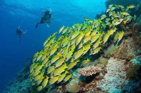 Six Senses Laamu - Underwater