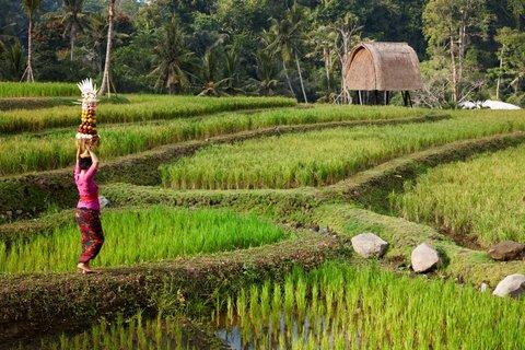 Mandapa, A Ritz-Carlton Reserve - Rice Field