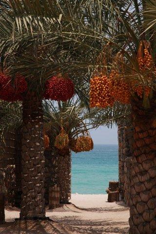 Six Senses Zighy Bay - Date Trees