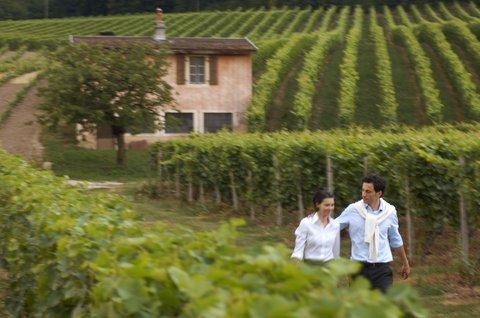انتركوتيننتال جنيف - The Wine Route in Lavaux