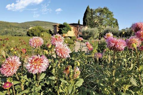 Villa La Massa - The Villa La Massa Garden - Horizontal Detail