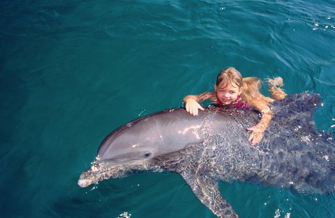 كراون بلازا إيلات - Area Attractions-Dolphin Reef