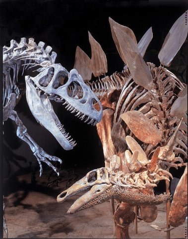 Homewood Stes Denver Dtwn Conv Ctr - Dinosaur Fossils Credit Rich Grant VISITDENVER