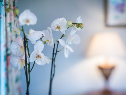 The Talbot Hotel - Flowers In Room