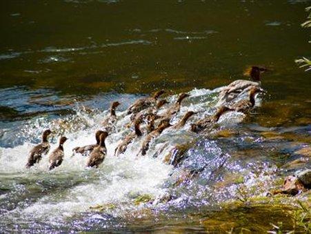 Rivers Bend Lodge - Cascade, MT