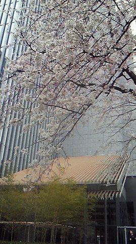 The Capitol Hotel Tokyu - Main Entrance Sakura