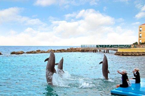 Curacao Hilton Hotel - Dolphin Encounter