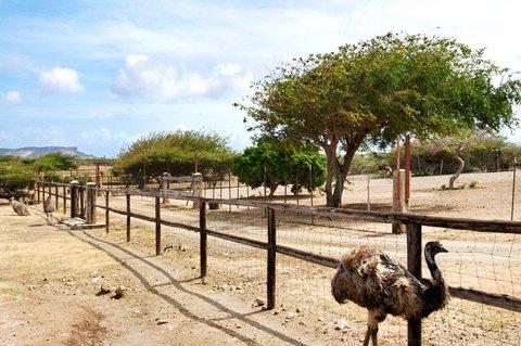 Curacao Hilton Hotel - Ostrich Farm