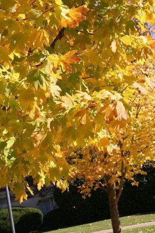 Hampton Inn - Suites Murray - Enjoy Fall