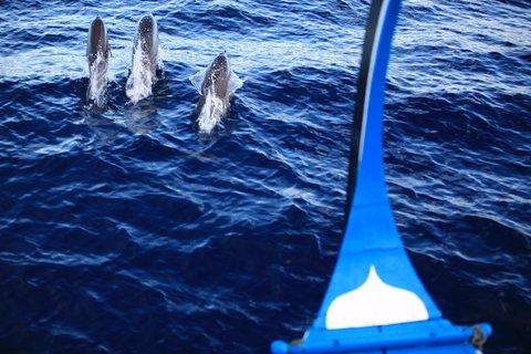 Six Senses Laamu - Dolphin Cruise