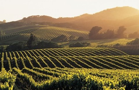 Rose Garden Inn - Napa Valley Vineyards Wine Grapevines