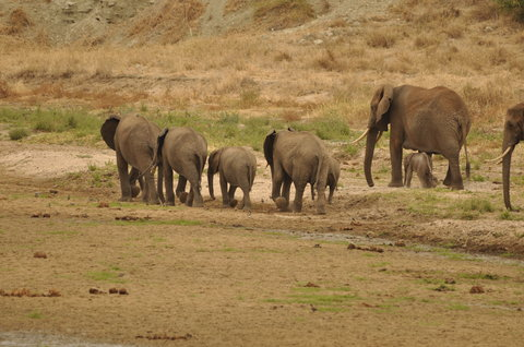 Sea Cliff Hotel - Elephants in National Park