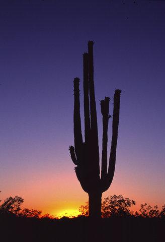 Hilton Garden Inn Chattanooga Hamilton Place - Cactus Sunset
