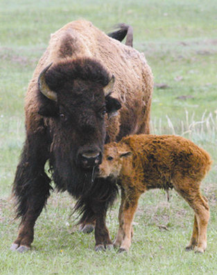 Best Western Dunmar Inn - Bear River State Park Buffalo