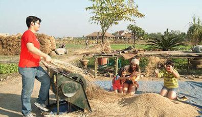 Vedic Village Spa Resort - Threshing rice in organic fields