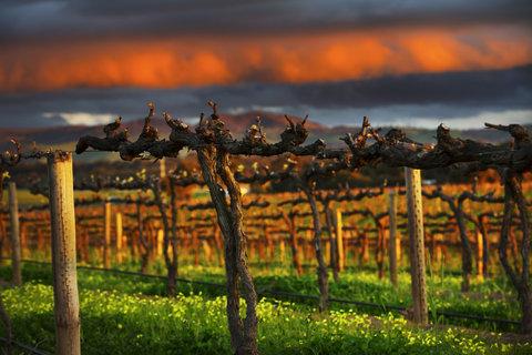 InterContinental Adelaide - South Australian Winery Region