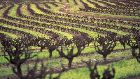 InterContinental Adelaide - Barossa Wine Region