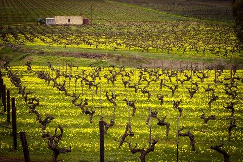 InterContinental Adelaide - South Australian Wine Region