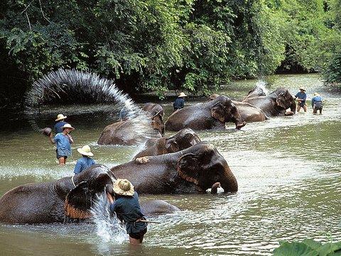 Veranda High Resort Chiang Mai - MGallery Collection - Other