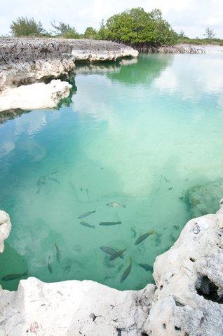 Tiamo Resort - blue holes