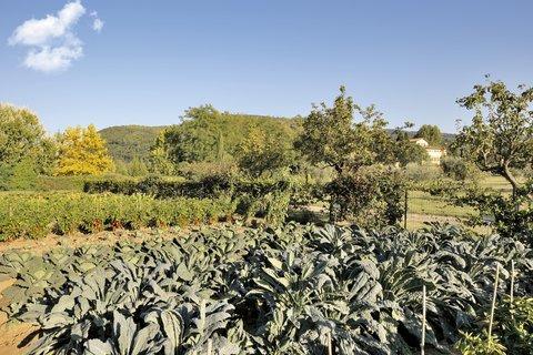 Villa La Massa - The Chef s Garden