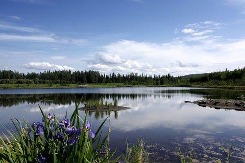 Bear Lodge - Wildlife Sanctuary