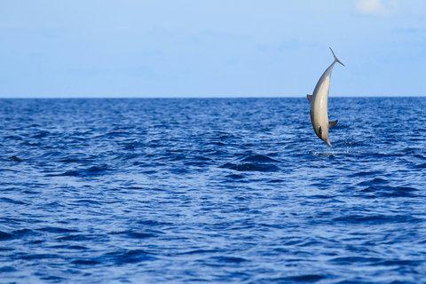 Velassaru Maldives - Dolphin Discovery