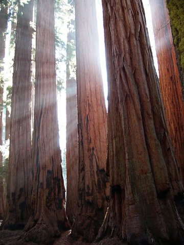 BEST WESTERN PLUS Fresno Airport Hotel - Sequoia National Park
