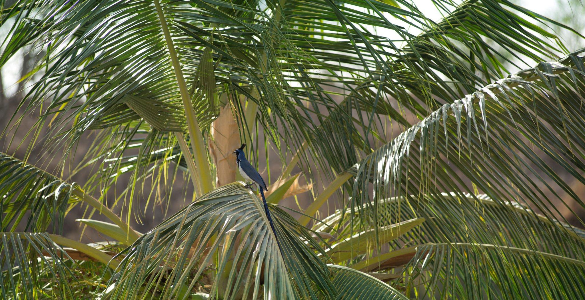 Grand Sirenis Matlali Hills Resort