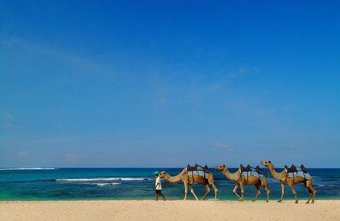 Nikko Bali Resort and Spa - Camel Safari