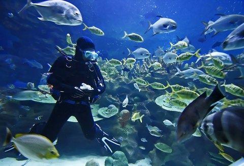 St. James Club All Inclusive Hotel - Antigua Scuba Diving
